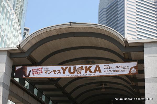 マンモス「YUKA